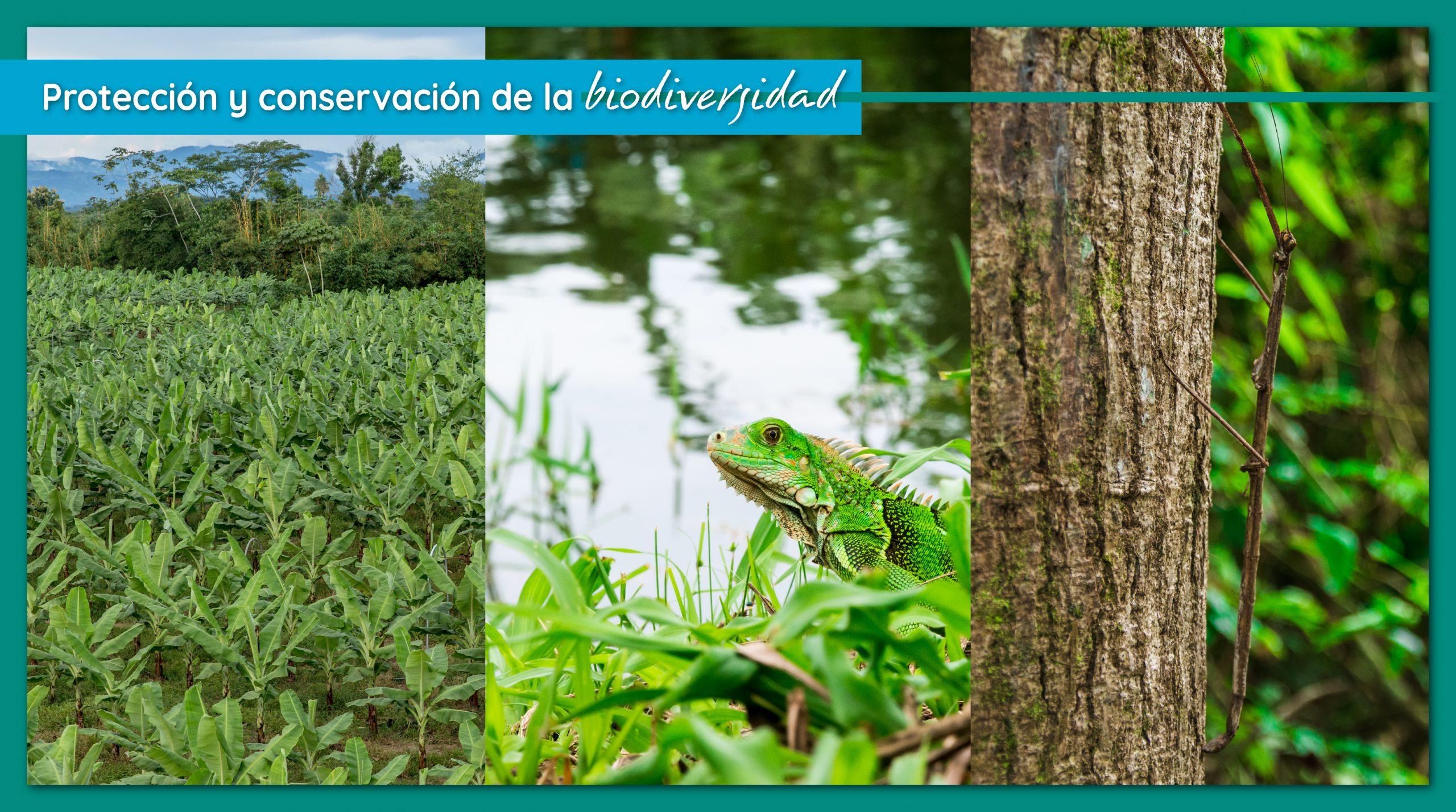 Protección y conservación de la biodiversidad